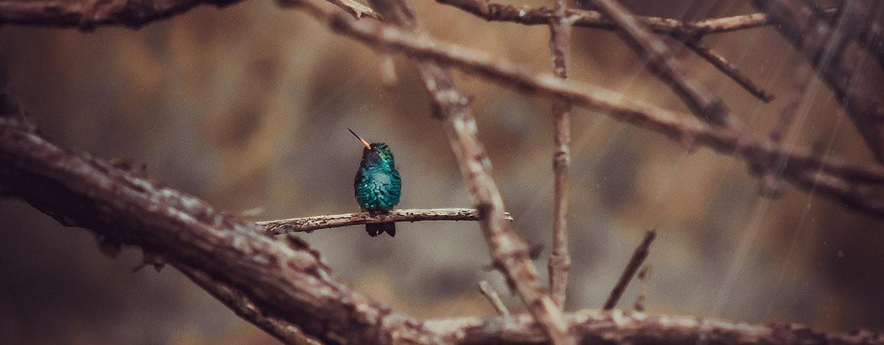 colibri_foto08